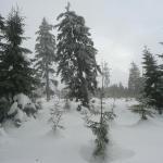 Karkonosze w śniegu