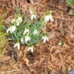Powrót wiosny