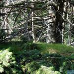 Niszczejący las