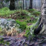 Las w drodze na Szczeliniec