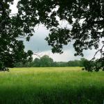 Moczary i łąki